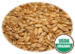 Organic Wheatgrass Seeds (Hard Red Winter Wheat)