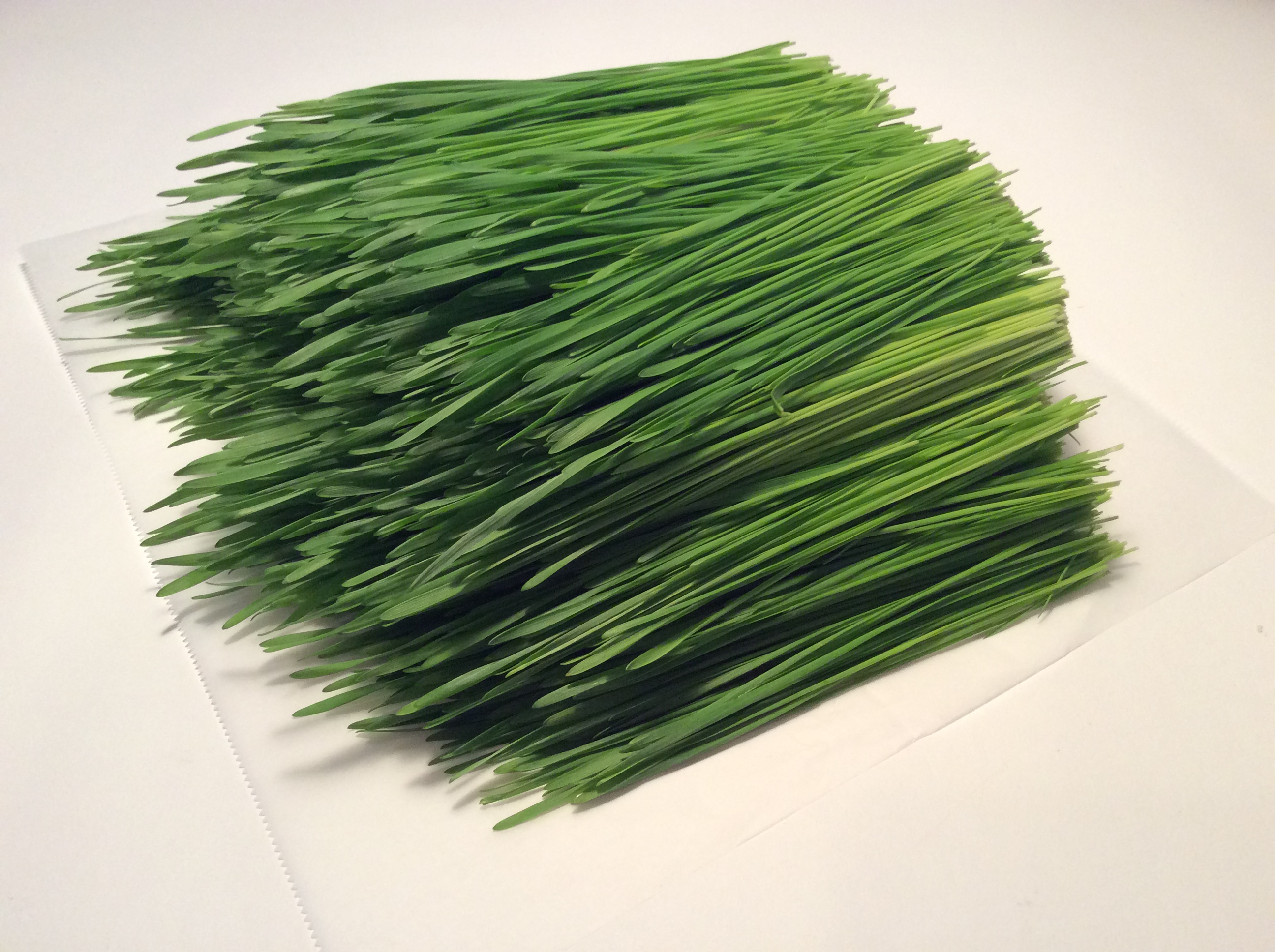 The Wonderful World of Wheatgrass!