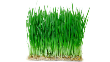 Shop WheatGrass