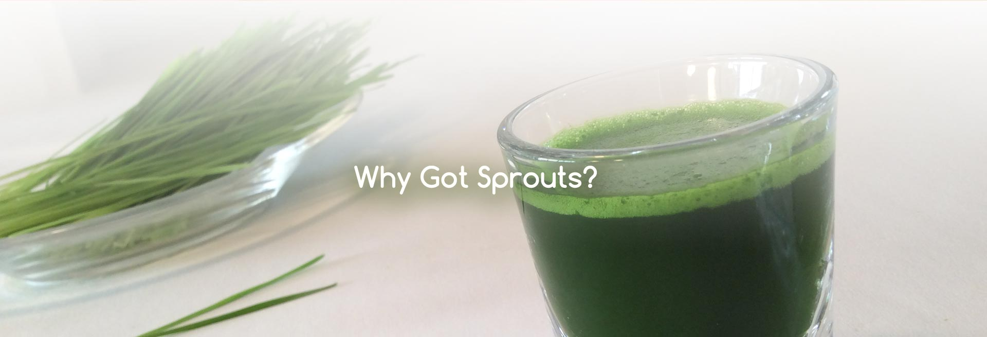 Got Sprouts Organic Wheatgrass and Sprouting