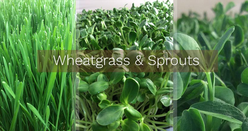 Wheatgrass & Sprouts
